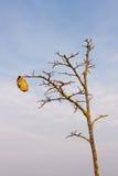 Naked Autumn Tree Royalty Free Stock Photo