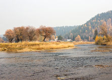 Naked autumn trees near river Stock Photos
