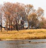 Naked autumn trees near river Royalty Free Stock Photo