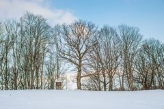 Naked bare big trees in winter. Blue sky stock photo