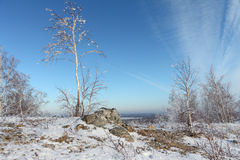 Naked birch in hoarfrost standing on the hill Royalty Free Stock Photography