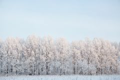 Naked birch tree branches covered by snow and frost against the blue sky with white light clouds royalty free stock photo