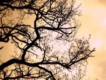 NAKED BRANCHES Royalty Free Stock Images