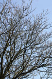 Naked branches over blue sky Stock Photo