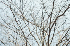 Naked branches of a tree against blue sky Royalty Free Stock Photography