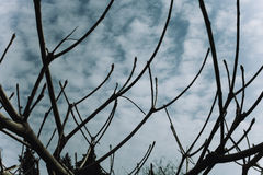 Naked branches of a tree against blue sky Stock Photo