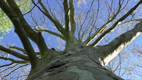 Naked branches of a tree against blue sky close up stock video footage