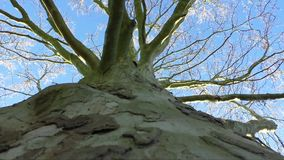 Naked branches of a tree against blue sky close up stock video