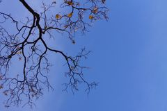 Naked branches of a tree against blue sky close up royalty free stock photography