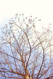 Naked branches of a tree against Stock Photo