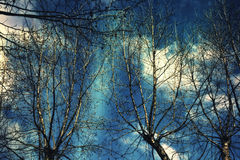 Naked branches of a tree against the dark blue sky stock photo