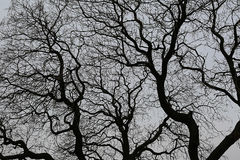 Naked branches of a tree against the dark sky Stock Images