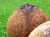 Naked coconuts Royalty Free Stock Photography