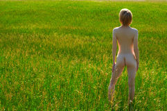 Naked girl in field Stock Photography