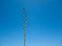 Naked green tree. Isolated on sky background Royalty Free Stock Photography