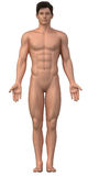 Naked man in anatomical position Stock Image