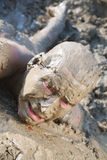 Naked man  mud Stock Image