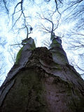 Naked nature. Tree photographed from an interesting angle in winter on the wood Royalty Free Stock Photography