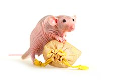 Naked rat Royalty Free Stock Photography