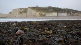 Naked seaweed on the background Etretat. France. December 2016. HD stock footage