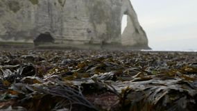 Naked seaweed at low tide on the background of rocks. Etretat. December 2016. HD stock video