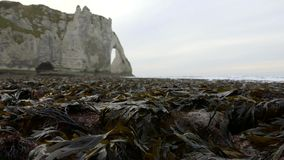 Naked seaweed at low tide on the background of rocks. Etretat. France. December 2016. HD stock video