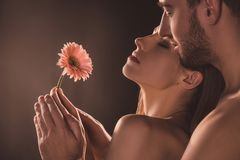 Naked sensual lovers holding flower,. On brown royalty free stock images