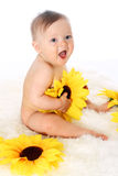 Naked smiling baby sitting on the fur in a full-length with sunflowers in his hands Stock Photos