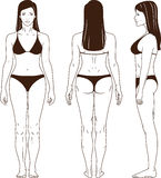 Naked standing woman vector. Full length front, back, side view of a standing woman in swimsuit. You can use this image for fashion design and etc Stock Image