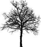 Naked tree. Silhouette of tree in winter Royalty Free Stock Image