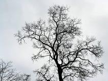 Naked tree Stock Photos