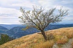 Naked tree in autumn mountains Royalty Free Stock Photos