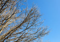 Naked tree branches against  sky Royalty Free Stock Images