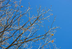 Naked tree branches against  sky Stock Photos