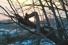 Naked tree branches against the sunset. Royalty Free Stock Images