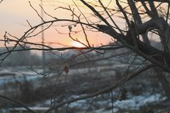 Naked tree branches against the sunset. Stock Images