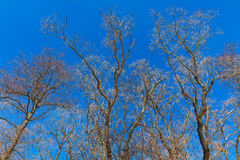 Naked tree branches Stock Image