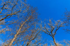 Naked tree branches Stock Photos