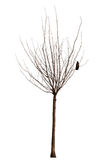 Naked tree with crow Royalty Free Stock Image