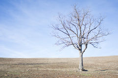 Naked tree on dry land Stock Photo