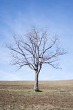 Naked tree on dry land Royalty Free Stock Photos