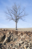 Naked tree on dry land Stock Images