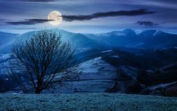 Naked tree on the grassy hill at night. In full moon light. mountain ridge with snowy tops in the distance. fine autumn weather Royalty Free Stock Photos