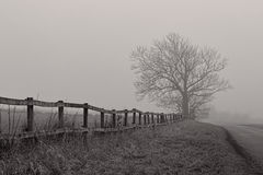 Naked Tree in the Haze. Black and white shot of a naked tree and a fence in the haze Royalty Free Stock Photos