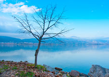 Naked Tree in Kastoria in Greece Royalty Free Stock Photo