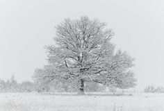 Naked tree in a snowfield Stock Photos