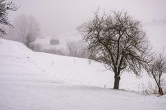 Naked tree on snowy rural hillside in fog. Gloomy countryside winter scenery Stock Photos