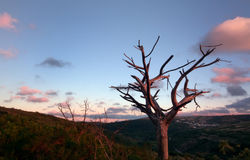 Naked tree. Top of the hill in new church, Mafra, Portugal Stock Images