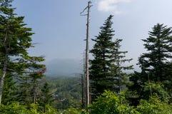 Naked tree among woods Stock Image