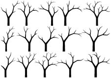 Naked trees. Silhouettes of naked trees on white background Royalty Free Stock Images